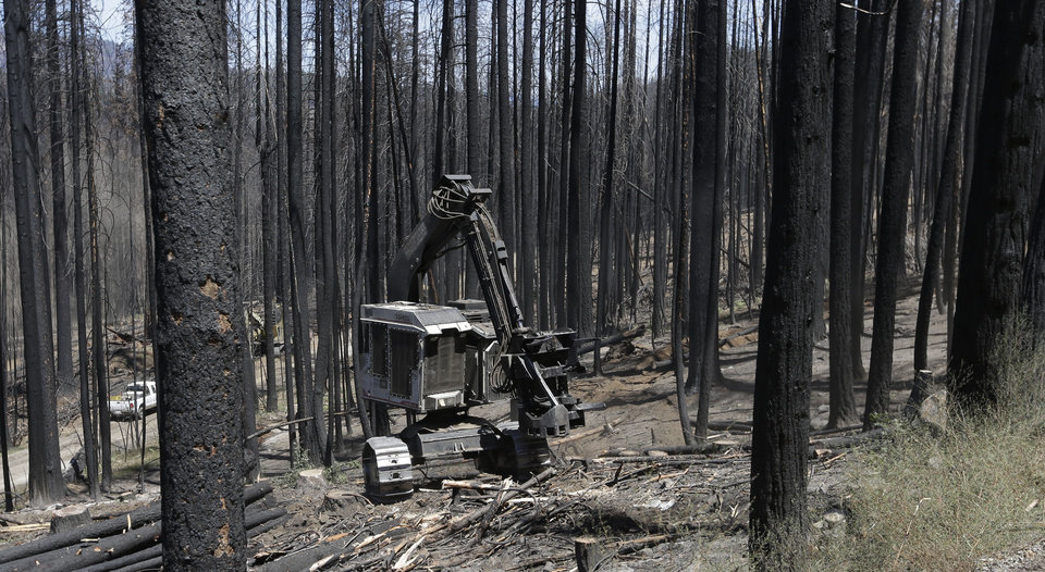 Photo - In this Friday, July 25, 2014 photo, harvester cuts down a tree harvested burned by the Rim Fire, in the Stanislaus National Forest near Groveland, Calif.  Nearly a year after the Rim Fire charred thousands of acres of forest in California's High Sierra, a debate rages over what to do with the dead trees, salvage the timber to pay for forest replanting and restoration or let nature take its course. Environmentalist say that the burned trees and new growth beneath them create vital habitat for dwindling bird such as spotted owls, and black-backed woodpeckers and other wildlife. (AP Photo/Rich Pedroncelli)