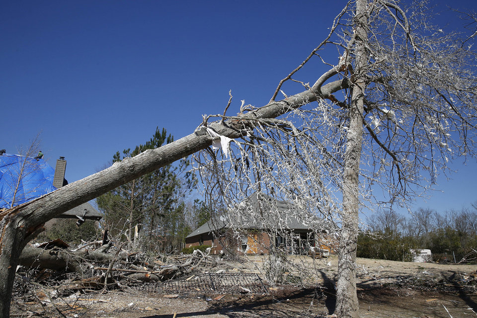 Photo - Insulation covers many damaged trees on Wednesday, March 2, 2016, after a storm struck Bessemer, Ala., on Tuesday night. Forecasters say a tornado that severely damaged homes and trees in the Birmingham suburb has been determined as an EF2, with winds of between 120 and 125 mph.   (AP Photo/Brynn Anderson)