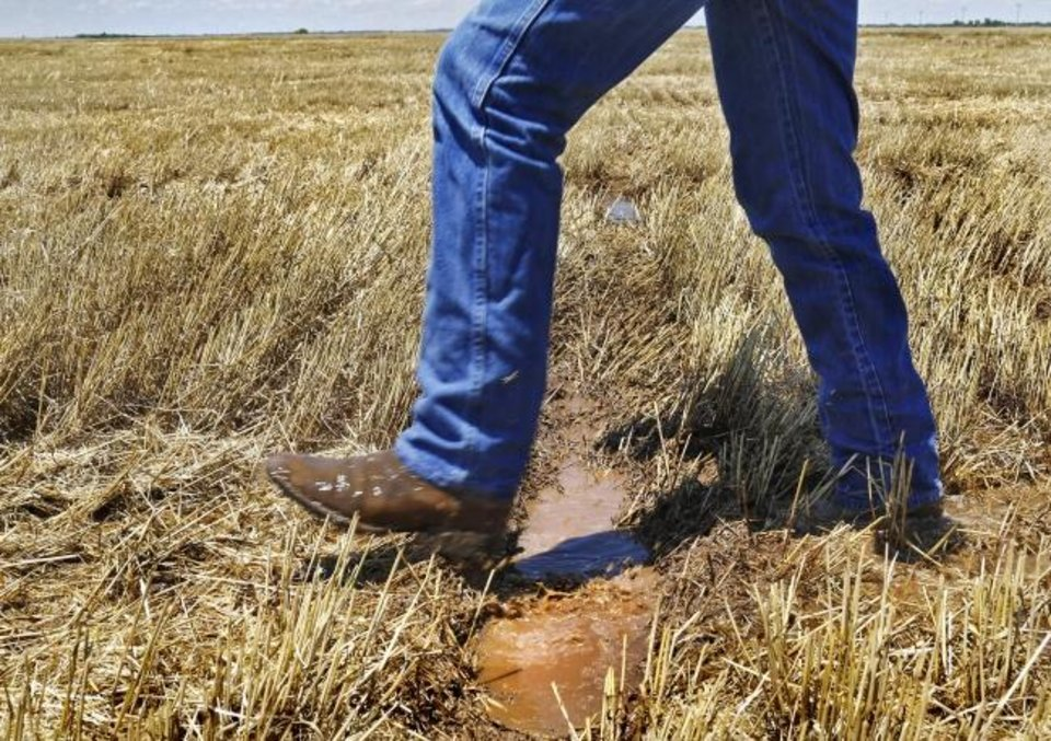 Photo -  VonTungeln walks through a soggy field where wheat was harvested from his farm near Calumet. VonTungeln said harvest normally would be finished on his farm, by now. [JIM BECKEL/THE OKLAHOMAN]