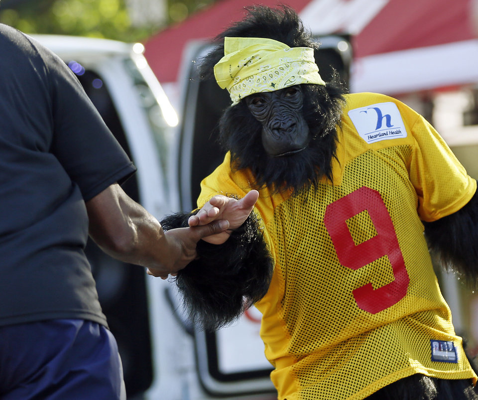 Photo - Reed Hammond wears a gorilla costume as he encourages runners at the top of Gorilla Hill near NW40th and Shartel Ave. during the Oklahoma City Memorial Marathon in Oklahoma City, Sunday, April 28, 2013. Photo by Nate Billings, The Oklahoman