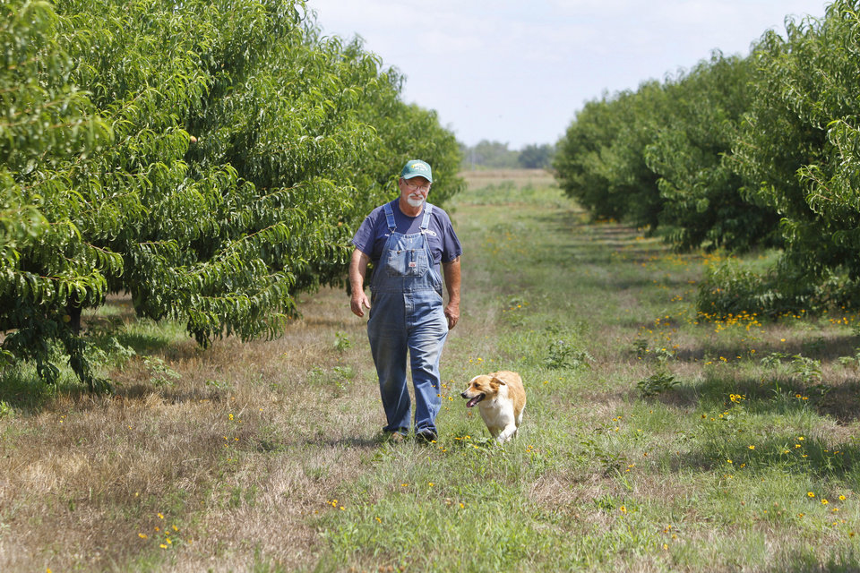 Craig Pullen and his dog Sandy walk  between rows of peach trees at the Pullen Peach Farm in Stratford Thursday. Photo By Steve Gooch, The Oklahoman <strong>Steve Gooch - The Oklahoman</strong>