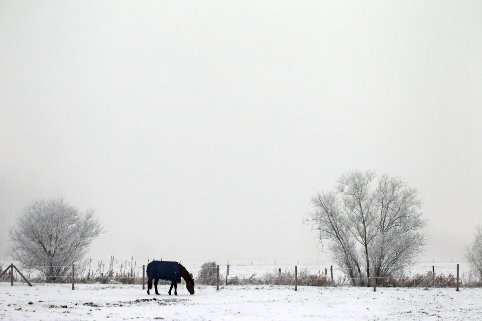 A horse grazes in a snow covered landscape, during freezing temperatures in Merelbeke, 60 km (37 miles) west of Brussels, Thursday, Jan. 17, 2013. (AP Photo/Yves Logghe)