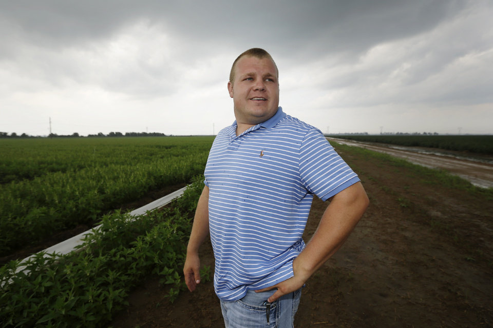 Photo - In this photo taken Friday, Aug. 8, 2014, farmer Seth Towles is interviewed at his 160 acres of sesame growing near Lake City, Ark. Thousands of acres from Arkansas to Georgia and Florida are planted in sesame this year where cotton has traditionally been king. (AP Photo/Danny Johnston)
