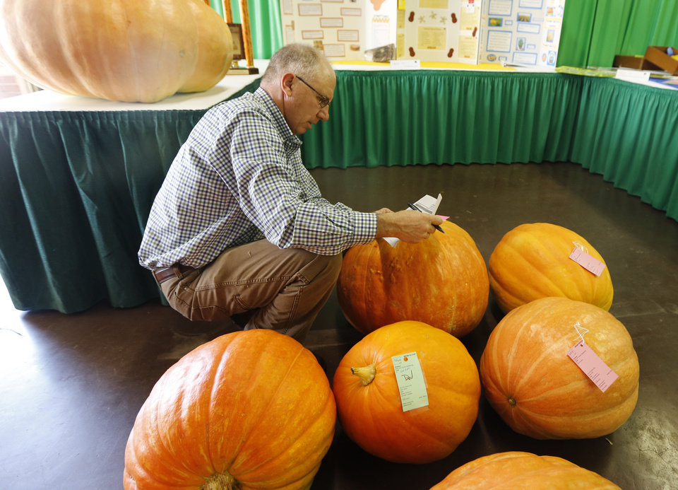 Photo - Lynn Brandenberger records the weights of pumpkins Wednesday in the Creative Arts Building at State Fair Park in Oklahoma City. The Oklahoma State Fair starts Thursday. Photo By Steve Gooch, The Oklahoman  Steve Gooch - The Oklahoman