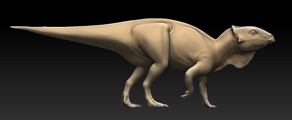 Photo -  This digital reconstruction depicts Aquilops, a newly discovered species of horned dinosaur, based on a 108-million-year-old fossil skull unearthed in Montana by a team of paleontologists, including scientists from the Sam Noble Oklahoma Museum of Natural History. PHOTO PROVIDED