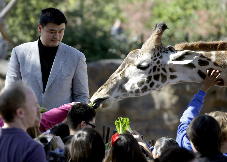 Photo - Yao Ming, a former Houston Rockets center, joins school children in feeding a giraffe at the Houston Zoo, Thursday, Feb. 14, 2013, in Houston. Yao has increased his role as an animal-rights activist since his retirement from basketball in 2011. (AP Photo/Pat Sullivan)