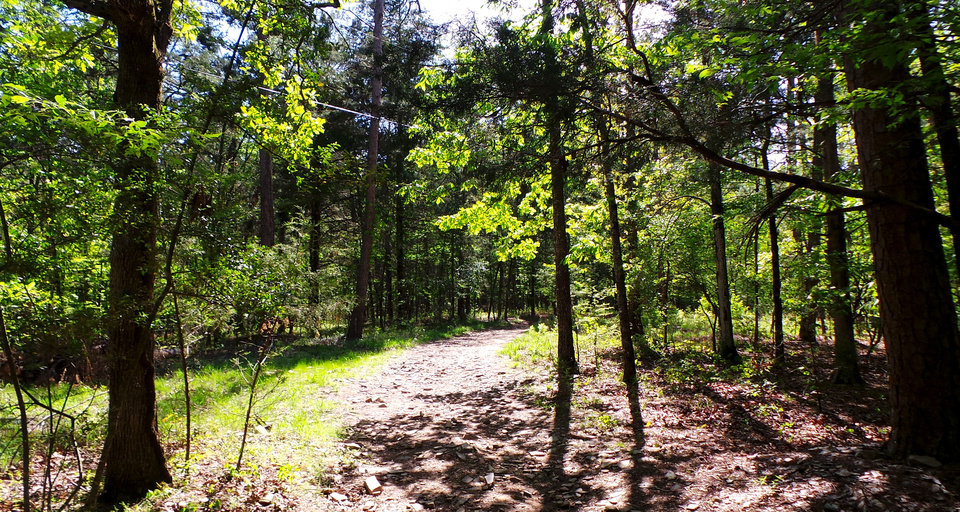 Photo - The David Boren Trails in the Cedar Bluff area of Beavers Bend Resort Park invite visitors into the forest. PHOTO BY LILLIE-BETH BRINKMAN, THE OKLAHOMAN