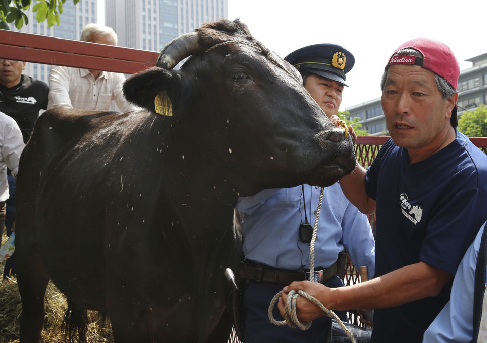 Photo - Japanese farmer Masami Yoshizawa, right, shows a black bull with speckles to the media as police officers block him from leading the bull off a truck he drove from Fukushima, northeastern Japan, in front of Agriculture Ministry in Tokyo Friday, June 20, 2014. Yoshizawa and fellow farmer Naoto Matsumura whose livelihoods were wrecked by the March 2011 nuclear disaster at the Fukushima Dai-Ichi nuclear plant have staged a protest briefly at the ministry to appeal for help with the livestock, some of which have developed unexplained white spots on their hides. (AP Photo/Koji Sasahara)