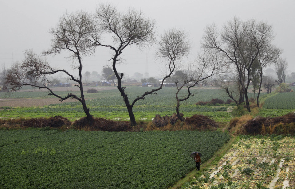 An Indian man walks through a vegetable field as it rains on the outskirts of New Delhi, India, Tuesday, Feb. 5, 2013. Heavy rains accompanied by a thunderstorm lashed the capital for the second day Tuesday throwing traffic out of gear across the city. (AP Photo/Altaf Qadri)