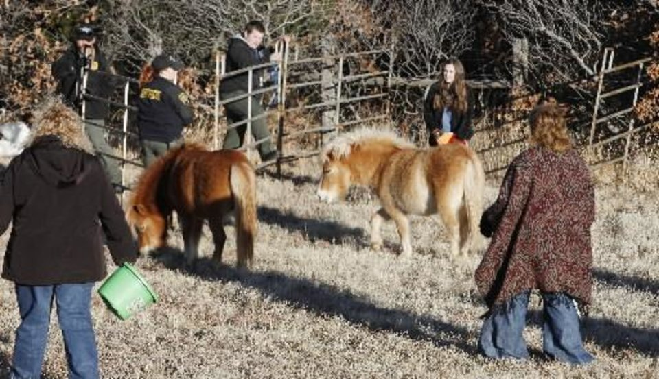 Photo - Oklahoma City Animal Control and bystanders try to contain two Shetland ponies on the side of I-40 one mile west of Harrah Road in Oklahoma City Friday, Feb. 1, 2013. They were trying to keep them from wondering onto the west bound lanes of the highway. Photo by Paul B. Southerland