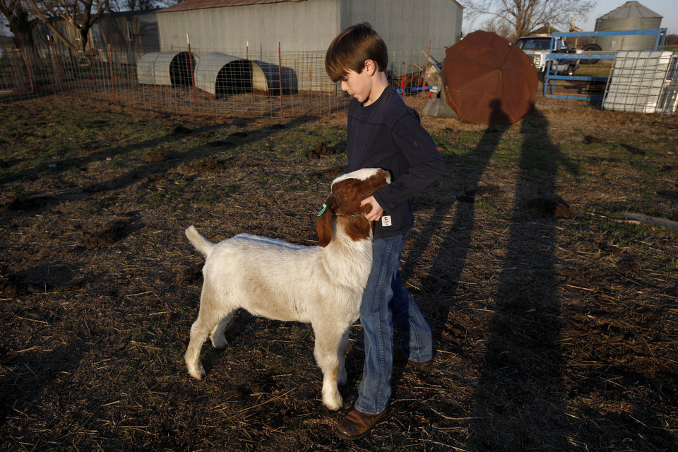 Photo - Garrett Lough works with a goat at a barn in Hennessey.