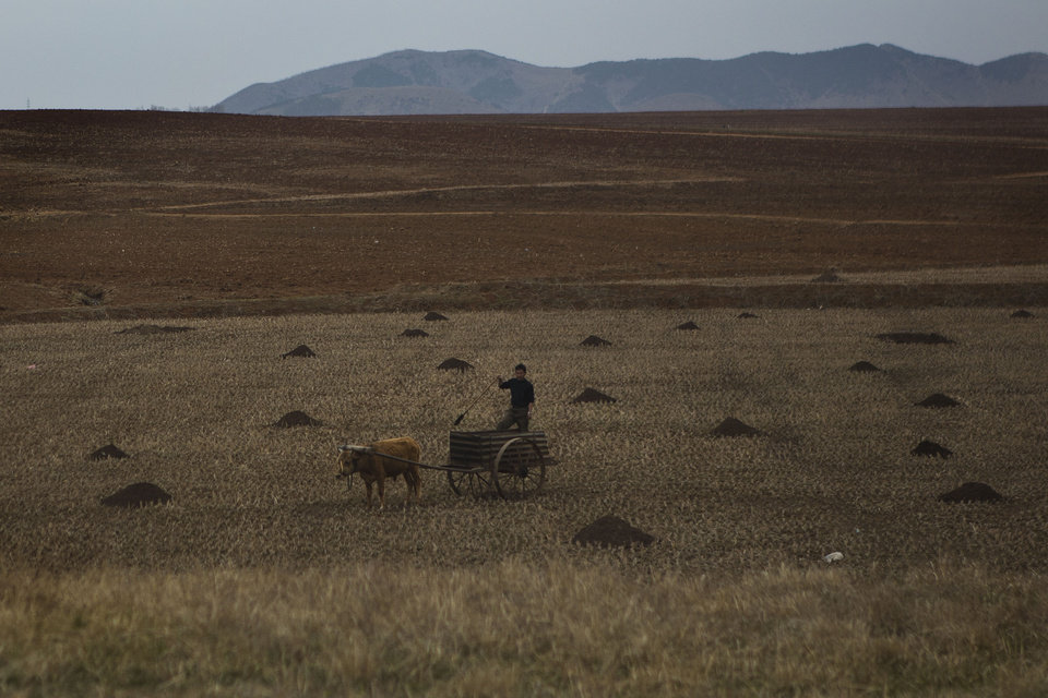 In this April 23, 2013 photo, a farmer works in a field south of Pyongyang, North Korea. (AP Photo/David Guttenfelder)