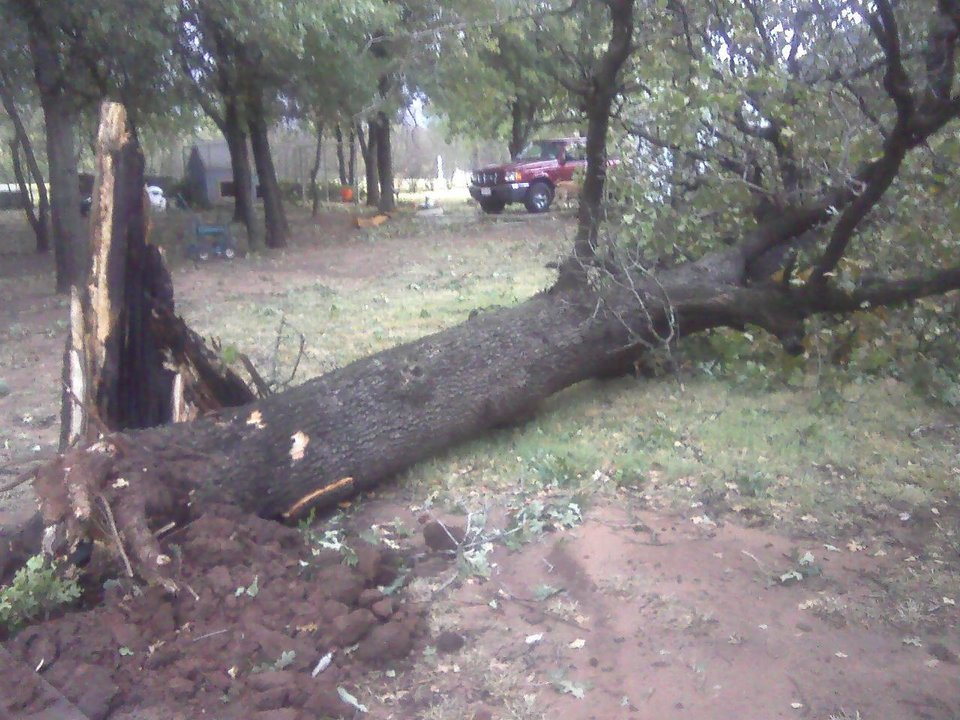 Photo - Downed tree in Edmond - Photo by Matt Patterson