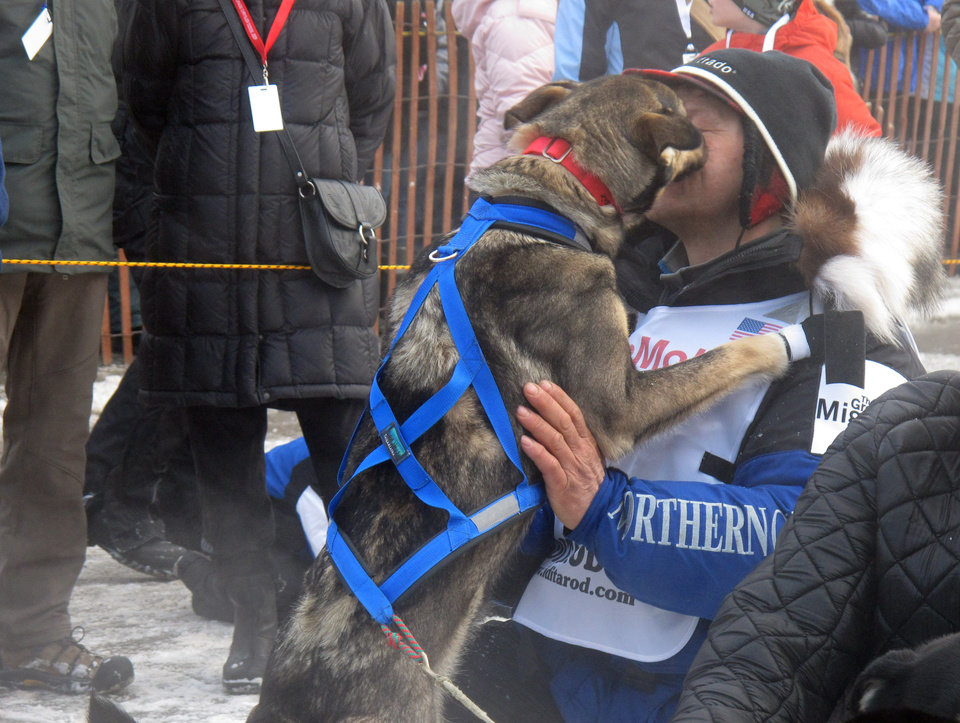 A lead dog licks four-time champion Martin Buser during the ceremonial start of the 2013 Iditarod Trail Sled Dog Race in Anchorage, Alaska on Saturday, March 2, 2013. The race, which will take mushers and dog teams about a thousand miles across the Alaska wilderness, starts Sunday, March 3, 2013, in Willow, Alaska. (AP Photo/Mark Thiessen)