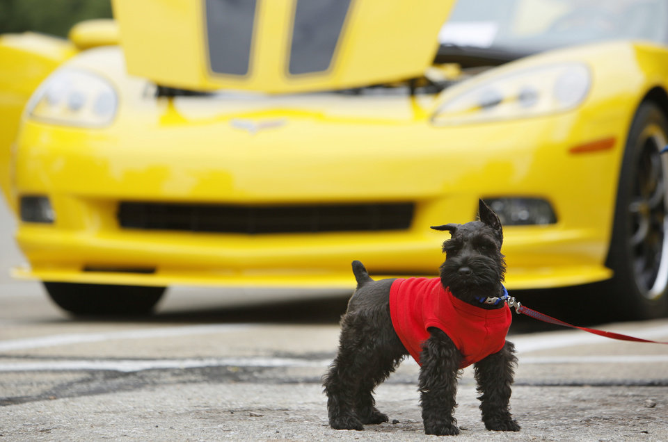 Riley, a miniature schnauzer, stands in front of Melia Thomas' 2007 Corvette during the Oklahoma Corvette Roundup at Hafer Park in Edmond, Okla., Saturday, May 12, 2012. Photo by Nate Billings, The Oklahoman