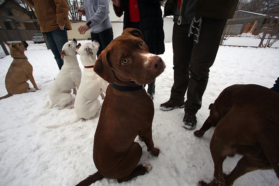 Pets Weston, from left, Sony, Harlow, Roman and Lucy pose for a group photo with their owners at the dog party, February 9, 2013, in Minneapolis, Minnesota. A reunion of five dogs born in the same litter was recently held at the Minneapolis home of Suzanne Berg. The rescue dogs, and some of their K-9 friends, were accompanied by their owners and guests. (Jim Gehrz/Minneapolis Star Tribune/MCT)