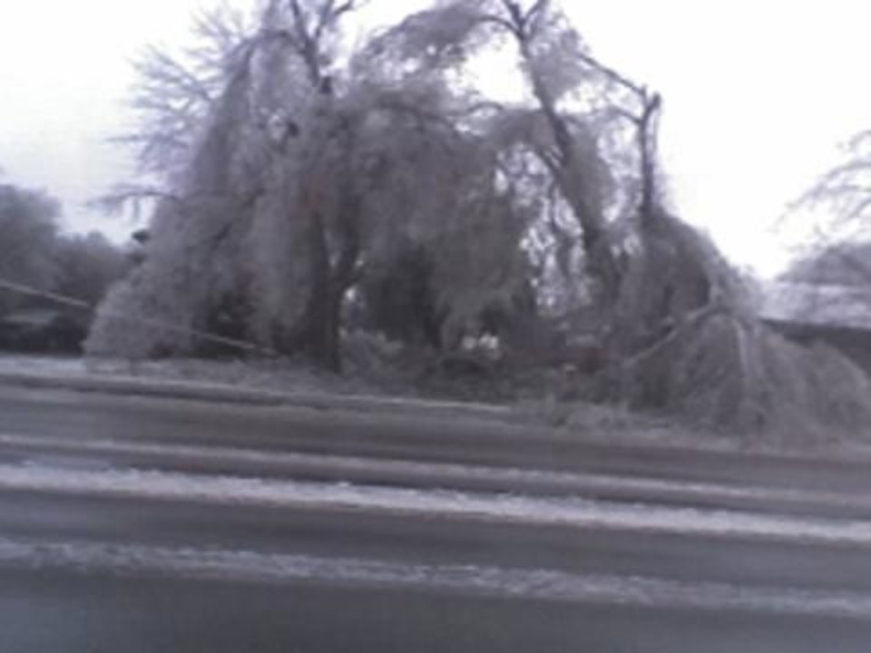 Ice damaged tree on Sooner.<br/><b>Community Photo By:</b> Robert Fuller<br/><b>Submitted By:</b> Robert, Midwest City