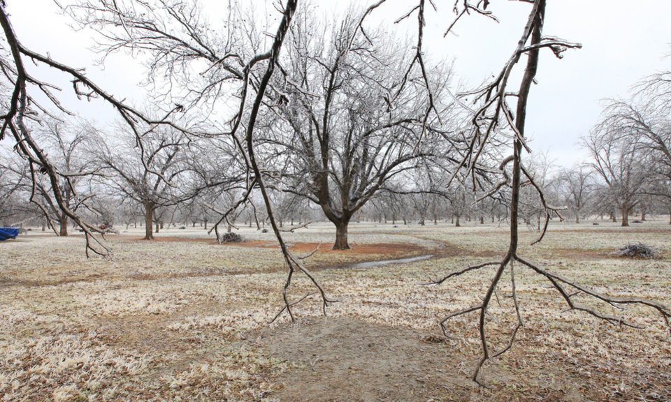 Photo - Pecan trees covered in ice at Couch Orchard in Luther Monday, Dec. 23, 2013.  Photo by Paul B. Southerland, The Oklahoman