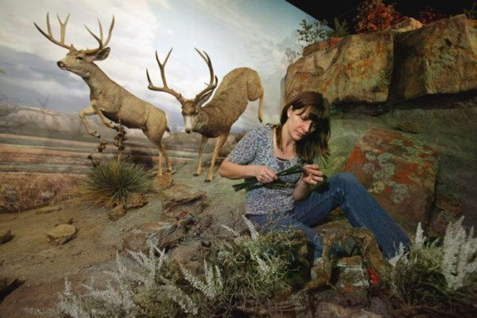 Botanical artist Galina Talbot places plants in a new exhibit showcasing Oklahoma's Black Mesa, which opens to the public Saturday at the Sam Noble Oklahoma Museum of Art. PHOTO BY STEVE SISNEY, THE OKLAHOMAN <strong>STEVE SISNEY</strong>