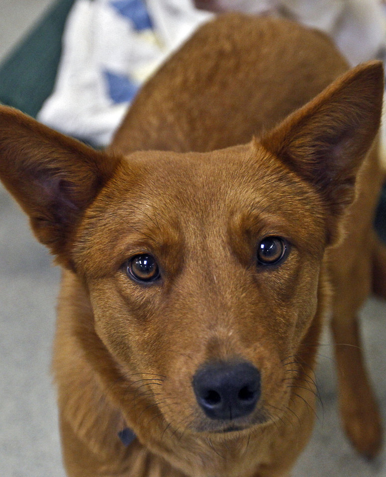 Photo - A dog awaits adoption Friday.