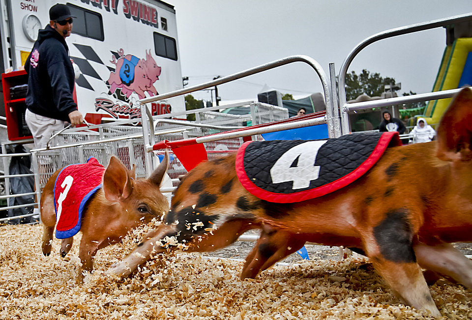 Photo - Pigs round the corner during the pig races at the Oklahoma State Fair at State Fair Park on Friday, Sept. 14, 2012, in Oklahoma City, Oklahoma.  Photo by Chris Landsberger, The Oklahoman