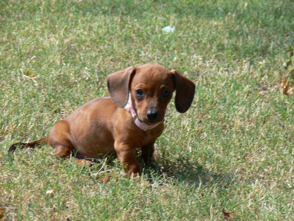 Our new family member,  Savannah.<br/><b>Community Photo By:</b> Jeff Graybill<br/><b>Submitted By:</b> Jeff, Midwest city