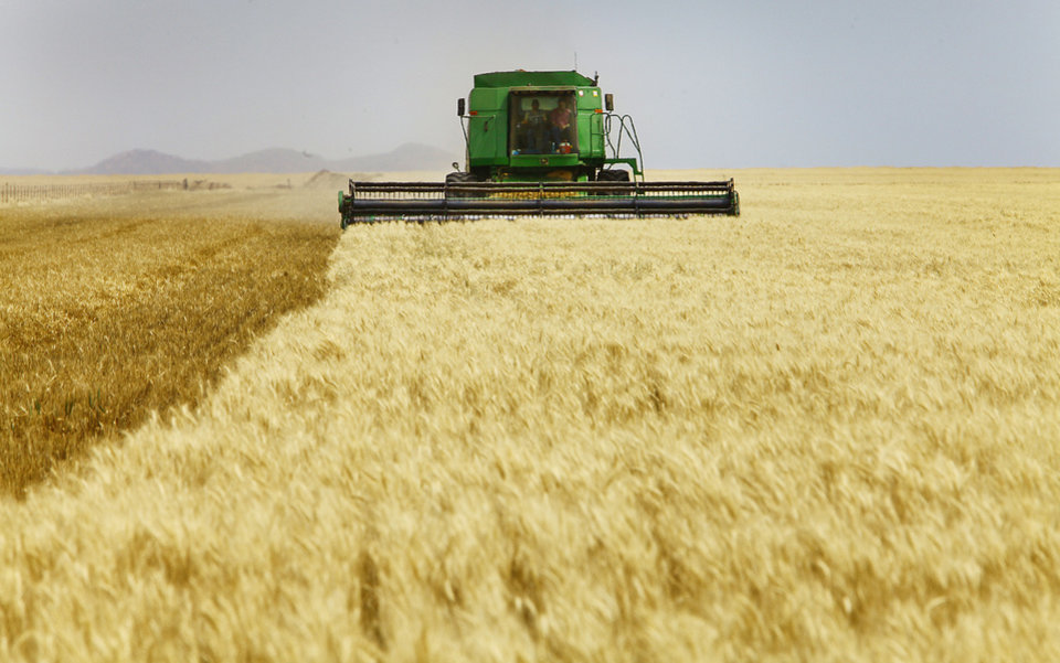 Photo - Josh Gammill harvests wheat in a field near Faxon.   David McDaniel - The Oklahoman