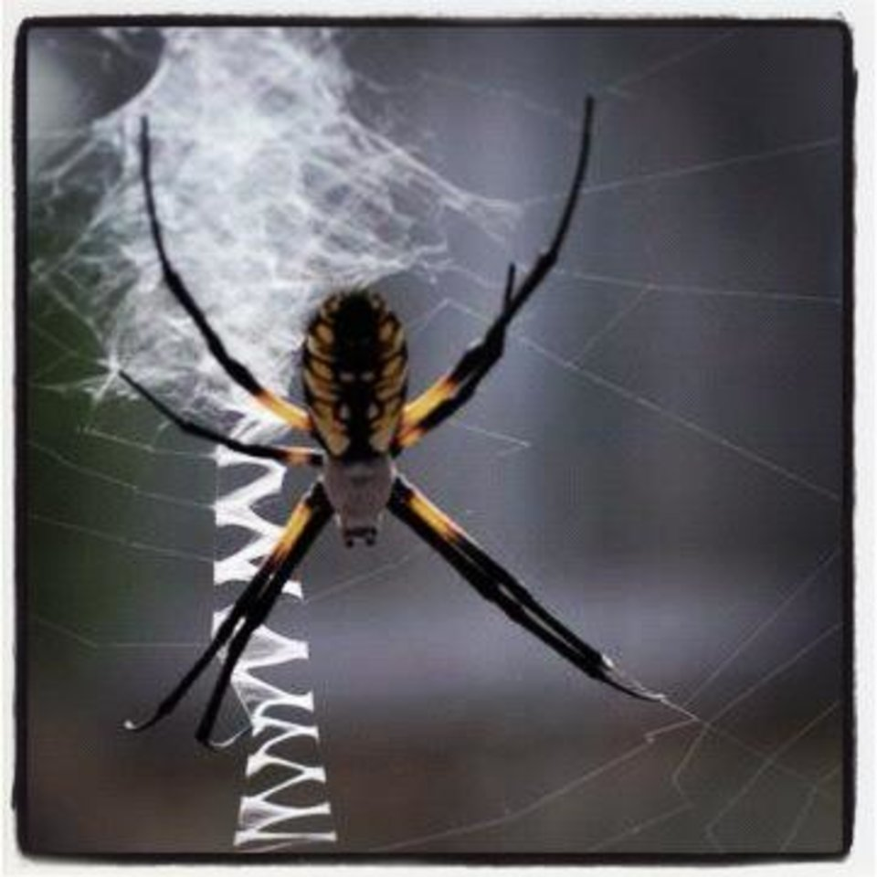 crafty spider - photo by jay spear