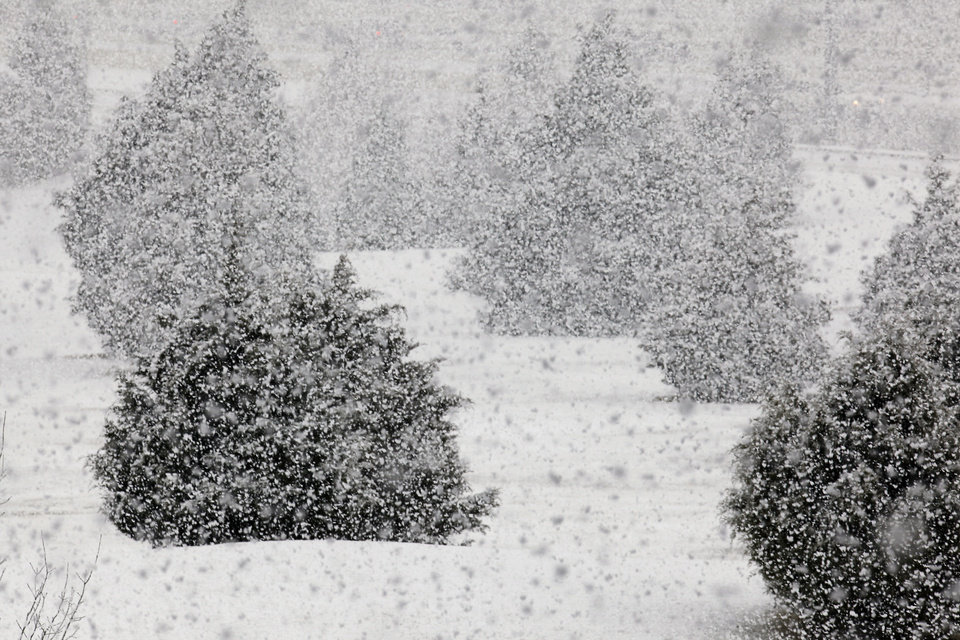 Photo - WINTER WEATHER / TREES: Heavy snow falling in northwest Oklahoma City at 8:15 am Monday, Feb. 8, 2010. Photo by Paul B. Southerland, The Oklahoman ORG XMIT: KOD