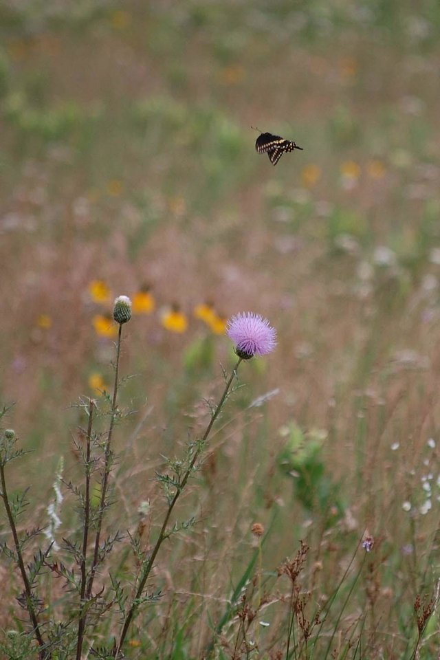 Butterfly over field of wildflowers in Pickett, OK (cropped)<br/><b>Community Photo By:</b> Cindi Tennison<br/><b>Submitted By:</b> Cindi , Bethany