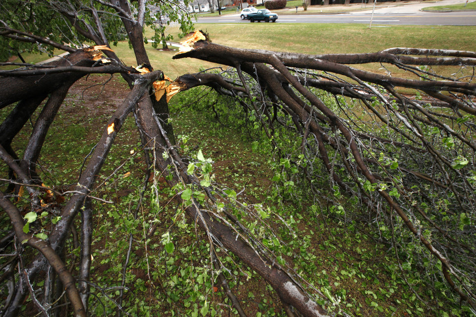 Photo - Trees down due to ice at south 9th and Kelly in Edmond , Wednesday, April 10, 2013. Photo By David McDaniel, The Oklahoman