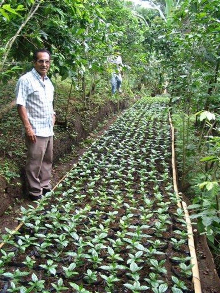In this undated publicity photo provided by Dean's Beans Organic Coffee, an unidentified member of the farmer's cooperative Prodecoop stands in a young coffee plant nursery in Esteli, Nicaragua. The plants will be transplanted into a farm, and within two to three years, will produce coffee. (AP Photo/Dean's Beans Organic Coffee, Dean Cycon)