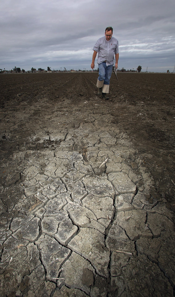 A farmer in Lemoore, Calif., checks his dry tomato bed. A severe drought will cut into California vegetable harvest this year. AP photo  <strong>Gary Kazanjian -  AP </strong>