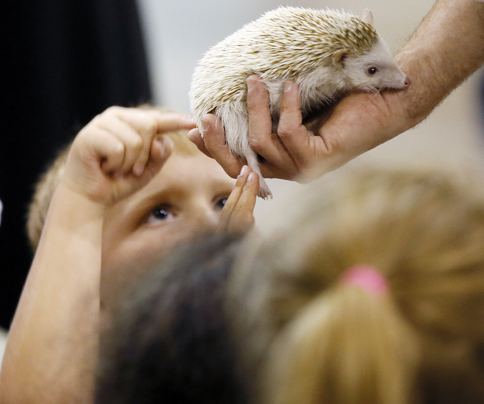 Photo -  Students touch a hedgehog during vacation Bible School at Edmond's New Hope Church of Christ. [PHOTO BY NATE BILLINGS, THE OKLAHOMAN]