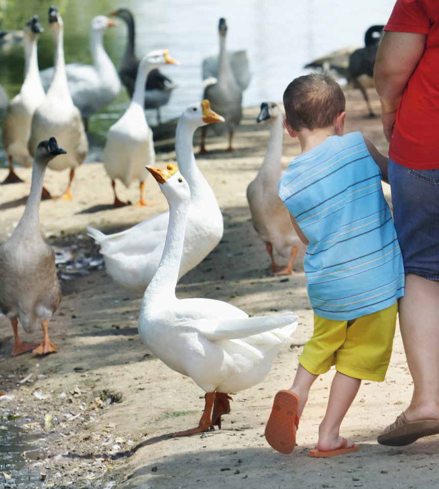 Cooper Priddy, 4, from Wellston, Okla., gives a goose some space at the Duck Pond on the University of Oklahoma campus Wednesday, August 11, 2010, in Norman, Okla. Photo by Steve Sisney, The Oklahoman