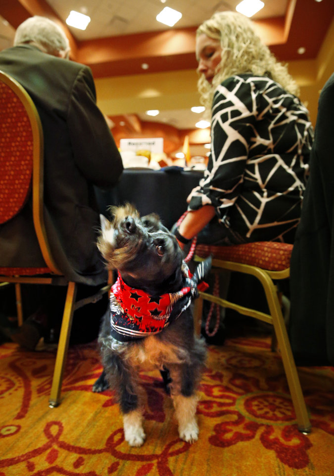 Photo - Sarge an assistance dog trained at the inmate run dog training program at LARC has a good shake before he is inducted into the animal Hall of Fame for his work with veterans on Saturday, Jan. 31, 2015 in Norman, Okla.  Photo by Steve Sisney, The Oklahoman