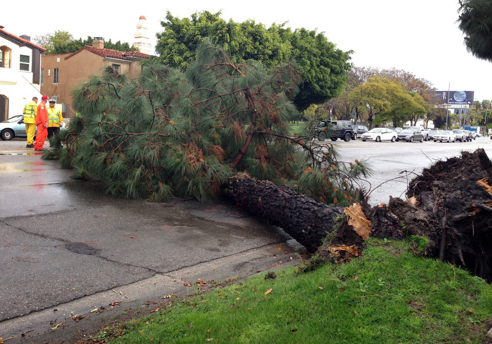 Photo - A toppled tree is shown after it fell over in the rain-soaked earth Friday Feb. 28, 2014 in Los Angeles. The first wave of a powerful Pacific storm spread rain and snow early Friday through much of California, where communities endangered by a wildfire just weeks ago now faced the threat of mud and debris flows. (AP Photo/Alicia Chang)