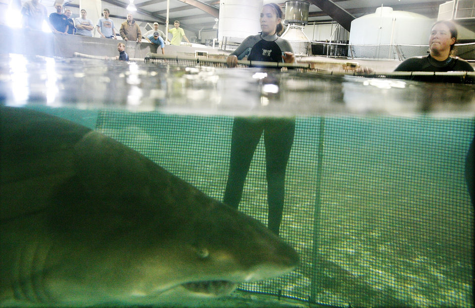 Photo - Penny Regier, left, and Christa Clawson block a shark with a net device as they work to move sharks into their new display at the Oklahoma Aquarium Wednesday, Oct. 29, 2008 In Jenks, Ok. (AP Photo/Tulsa World, Mike Simons) ORG XMIT: OKTUL101