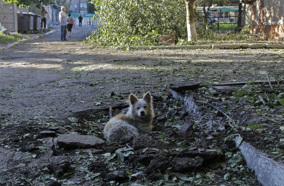 Photo - A dog rests in a hole after shelling took place in  the city of Slovyansk, Donetsk Region, eastern Ukraine Sunday, June 29, 2014. Residential areas came under shelling on Sunday morning  from government forces. (AP Photo/Dmitry Lovetsky)
