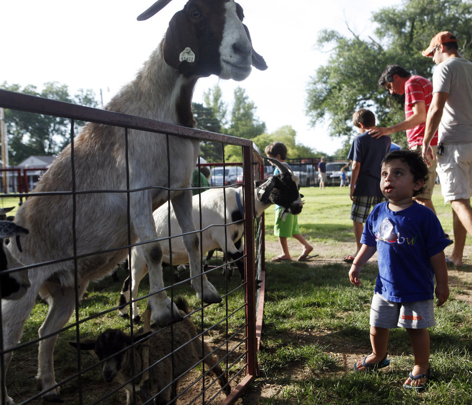 Photo -  Zeb Umdenstock, 2, of Edmond, checks out a large goat searching for food at a picnic celebrating St. John the Baptist Catholic Church's 125th anniversary. Photo by K.T. King, The Oklahoman   KT King -