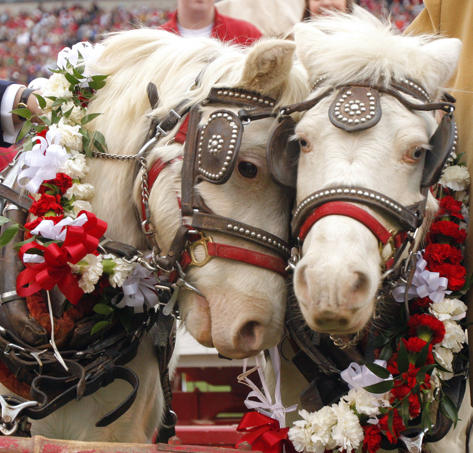 Photo - The retiring Sooner and Boomer during a ceremony in the college football game between the University of Oklahoma Sooners (OU) and the Oklahoma State University Cowboys (OSU) at the Gaylord Family-Memorial Stadium on Saturday, Nov. 24, 2007, in Norman, Okla. 