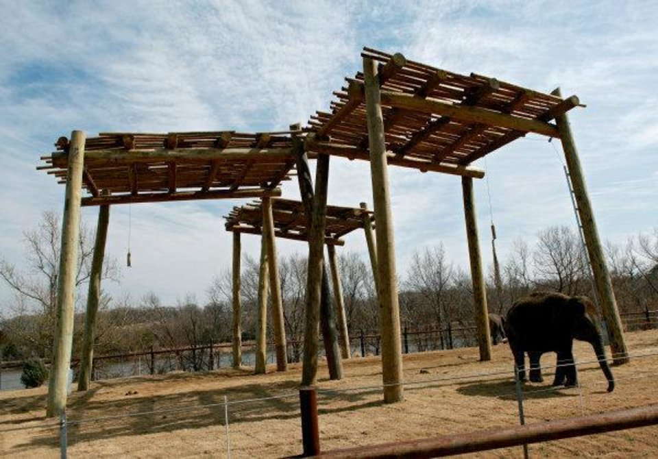 Photo - Asha, right, and Chandra walk around in the new elephant exhibit at the Oklahoma City Zoo. Several preview nights are scheduled for zoo members this week, and the exhibit opens to the public Friday.  John Clanton - THE OKLAHOMAN