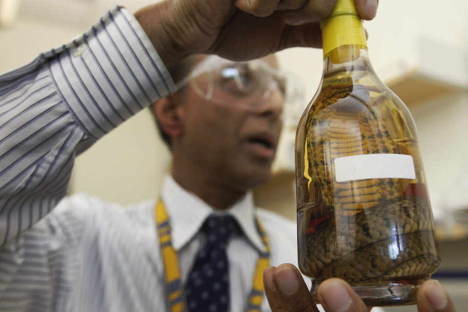 Photo - In this Thursday, April 19, 2012 photo, Dr. Abdul Mabud, director of the scientific services division of the U.S. Department of Treasury's Alcohol and Tobacco Tax and Trade Bureau, holds up a bottle of snake liquor from east Asia at a laboratory, in Beltsville, Md. The Alcohol and Tobacco Tax and Trade Bureau, which collects taxes on booze and smokes and tells the companies that produce them how to do business, is one example of the specialized government offices threatened by Washington's current zeal for cost-cutting. (AP Photo/Charles Dharapak)