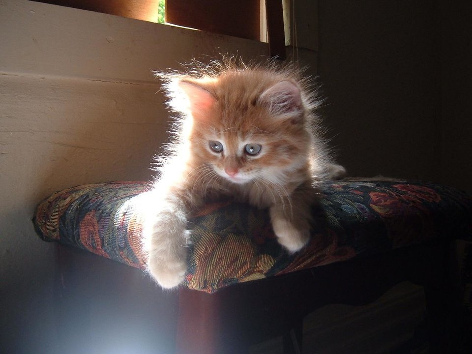 My kitten billy<br/><b>Community Photo By:</b> Reese Malkawi<br/><b>Submitted By:</b> idris, WAR ACRES