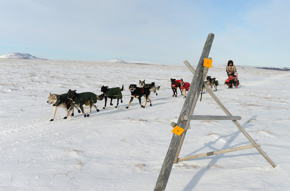 Photo - Iditarod musher Jeff King, from Denali, Alaska, mushes between the checkpoints of White Mountain and Safety, the last checkpoint before the finish line in Nome. King was the first musher to leave the White Mountain checkpoint during the 2014 Iditarod Trail Sled Dog Race on Monday, March 10, 2014. (AP Photo/The Anchorage Daily News, Bob Hallinen)