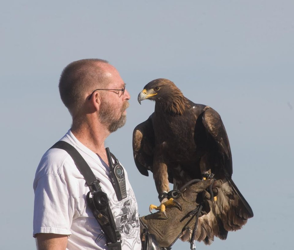 A falconer with his golden eagle. Photo courtesy of Rob Palmer, www.falconphotos.com.