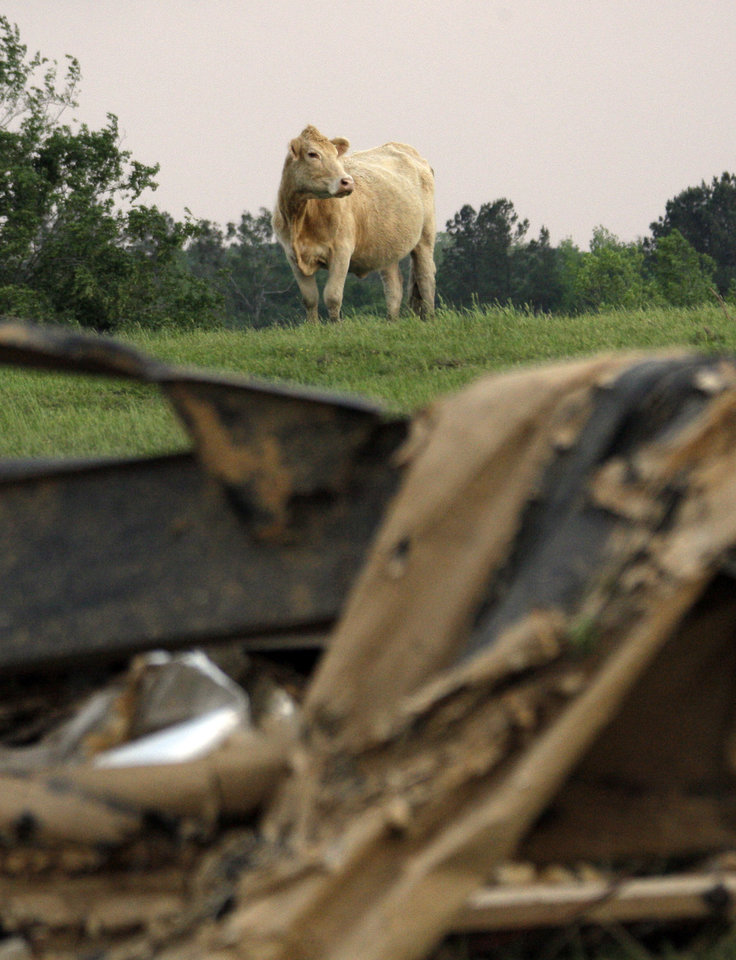 Photo - A cow surveys the remains of a trailer frame in Preston, Miss., following a tornado touchdown that took the lives of three women Wednesday, April 27, 2011. Several tornadoes hit  in the state resulting in number of deaths. (AP Photo/Rogelio V. Solis)