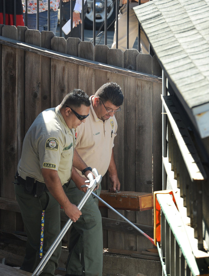 Photo - Officer Manuel Gonzales, left, and Lt. Fred Agoopi, from the Los Angeles County Animal Care & Control, carry a snake box that contains the captured venomous albino monocled cobra in Thousand Oaks, Calif., Thursday, Sept. 4, 2014. The snake was discovered missing on Monday in the 1300 block of Rancho Lane and now found behind a wood shed on Rancho Rd. (AP Photo/Ventura County Star, Chuck Kirman)