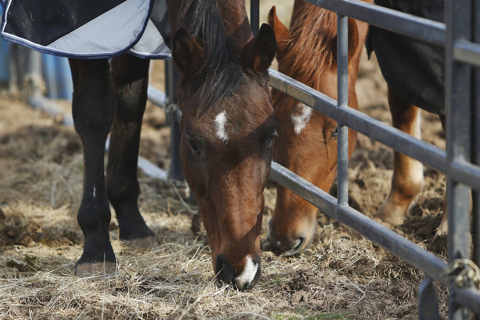 Photo -  In partnership with a pilot program run by the American Society for the Prevention of Cruelty to Animals, Nexus Equine works to rescue horses and rehome them, providing care and training before the horses are adopted out.
