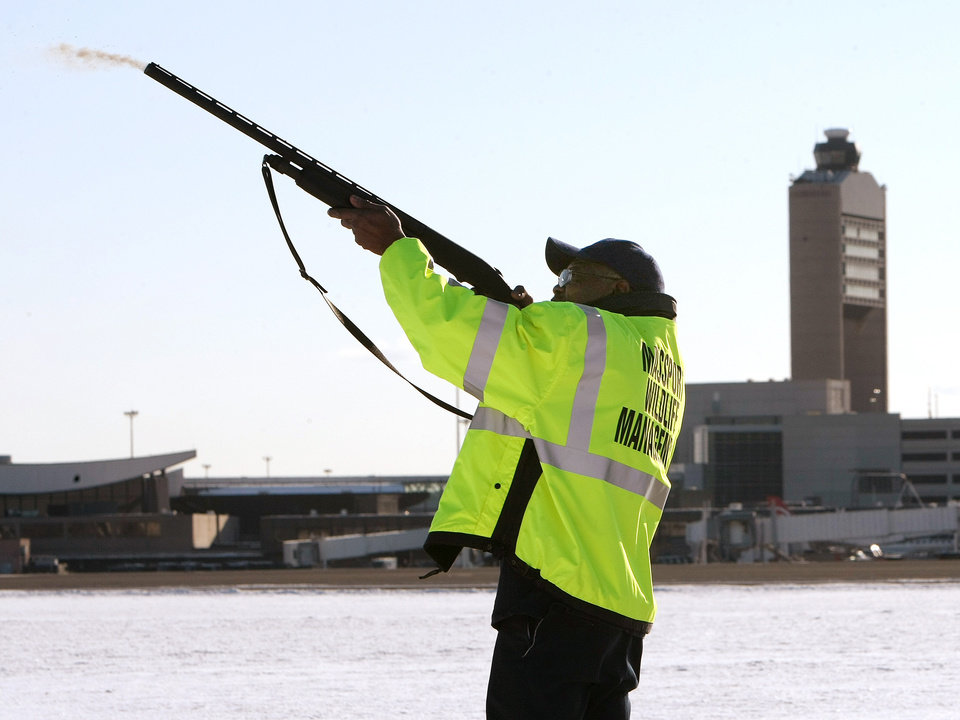 Photo -   FILE- In this Jan. 16, 2009 file photo, Ulysses Dublin, one of four full-time Massport wildlife technicians, fires a non-lethal pyrotechnic round from a standard shotgun to disperse birds from the runways and surrounding areas at Logan International Airport in Boston, Mass. Although there is evidence that bird-control efforts near airports are paying off, U.S. Sen. Kirsten Gillibrand, D-NY, introduced legislation on Wednesday, April 25, 2012 that would make it easier to round up geese near JFK Airport and kill them, after a second airliner was forced from the skies over New York due to a bird strike. (AP Photo/Pool, John Tlumacki, File)